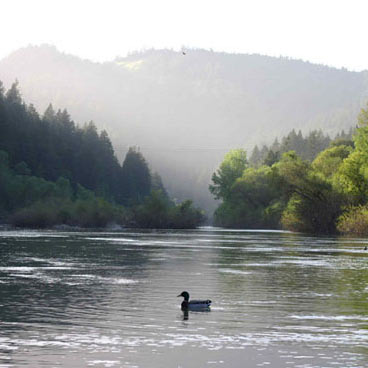 Scenic picture of the russian river with a duck