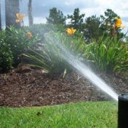 Irrigation system squirting water to yellow flower