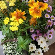 good bug flowers